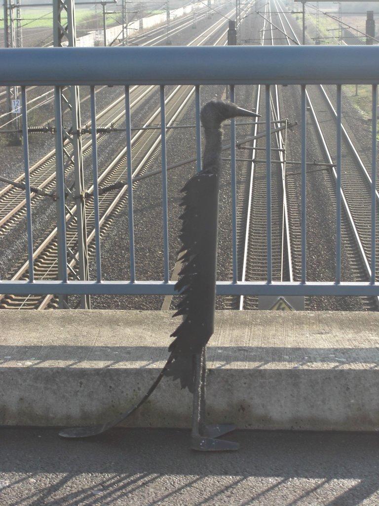 CIMG0788-Vogel-Bahngleise-2.jpg